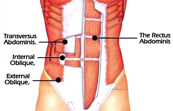 core-muscles-insert